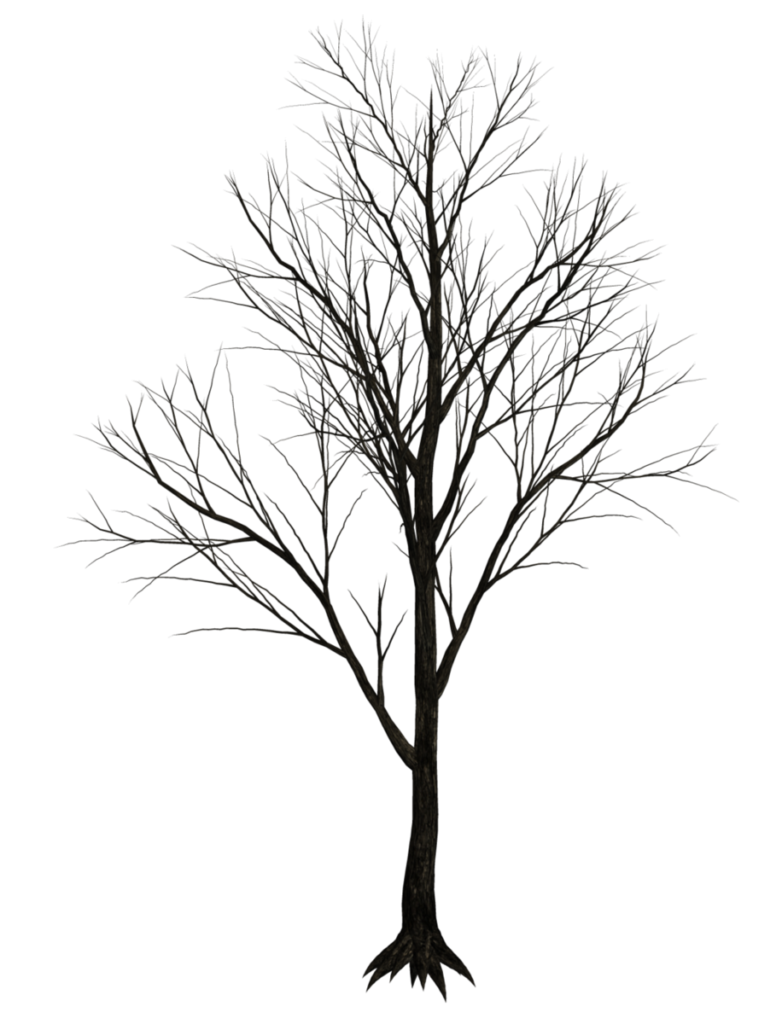 Tree_branches-782x1024